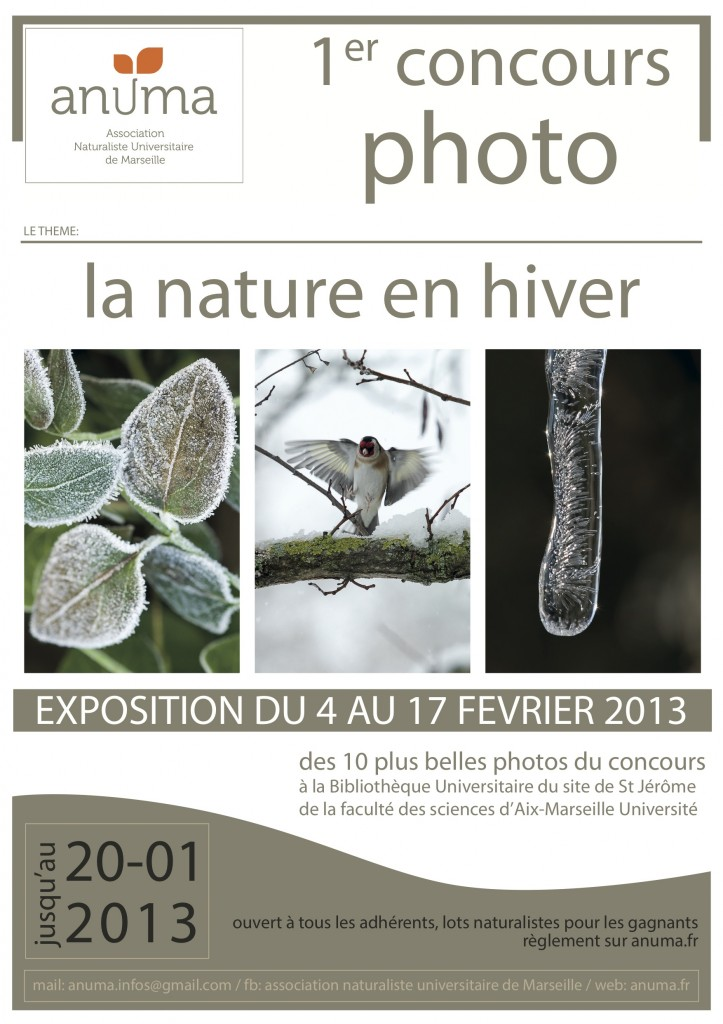 Affiche concours photo 2013