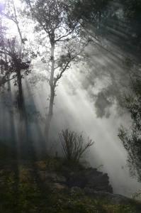 Bertino - Forêt
