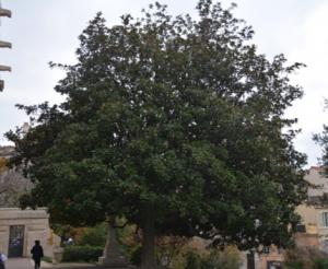 olivier 6